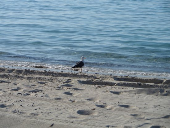Playa Pichilingue (Pichilingue Beach): Hermosas playas :)
