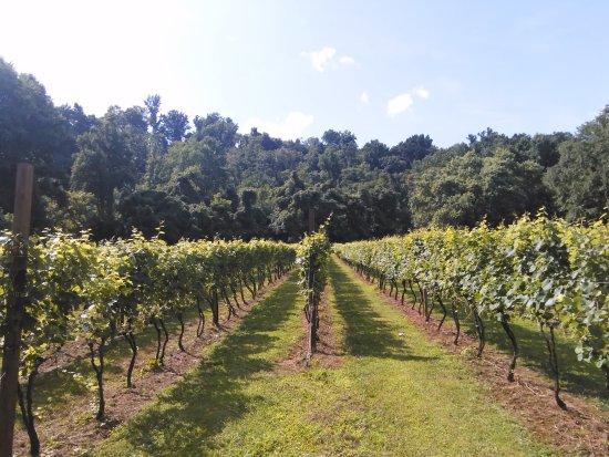 Lovingston, VA: On-site vineyard