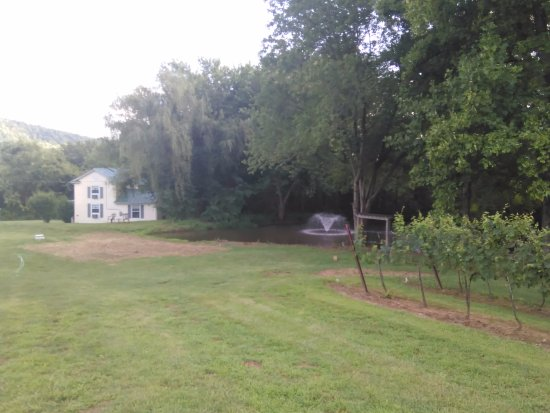 Lovingston, Virginie : Pond by the vineyard