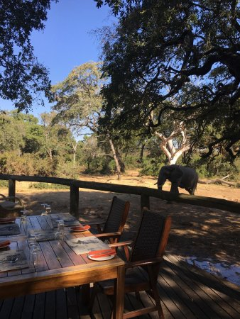Manyeleti Game Reserve, Zuid-Afrika: photo4.jpg