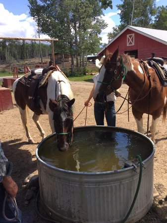 Jasper Riding Stables: Very well behaved horses, great for riders with no experience :)