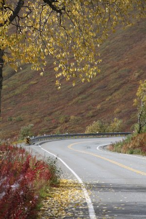 Independence Mine State Historical Park: The drive up to the mine in September