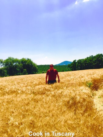 Montefollonico, Italien: George in a wheat field with Cook in Tuscany