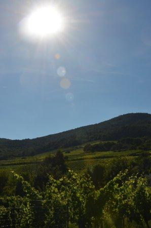 Dieffenthal, Francja: Les vignes