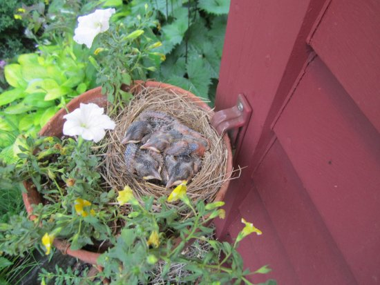 Weston, VT: Welcoming Committee in a flower pot just outside the front door.