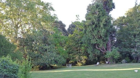 Maison Lespoune : partie gauche du parc Magnolia immense et sequoia