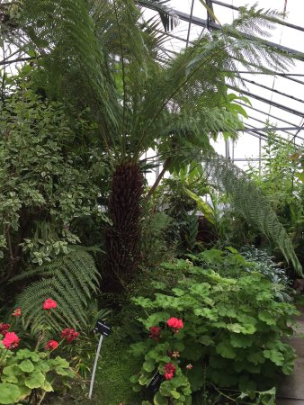 Bilsborrow, UK: Temperate glasshouse.