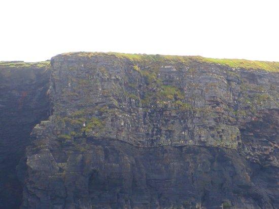Kilkee, أيرلندا: Cliffs