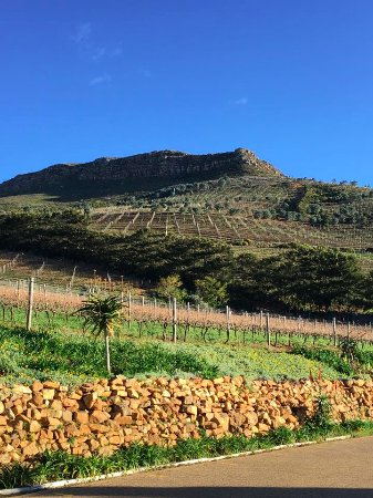 Constantia, Afrika Selatan: Amazing views, beautiful vineyards