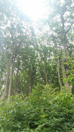 Mecklenburg-Vorpommern, Tyskland: Gespensterwald