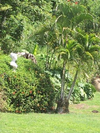 Trois-Ilets, Martinica: photo6.jpg