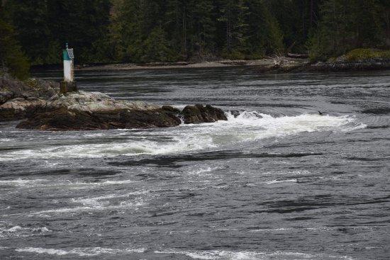 Egmont, Canadá: Skookumchuck Narrows