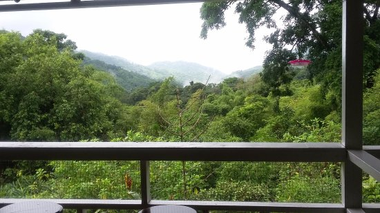 Arima, Trinidad: View from the veranda