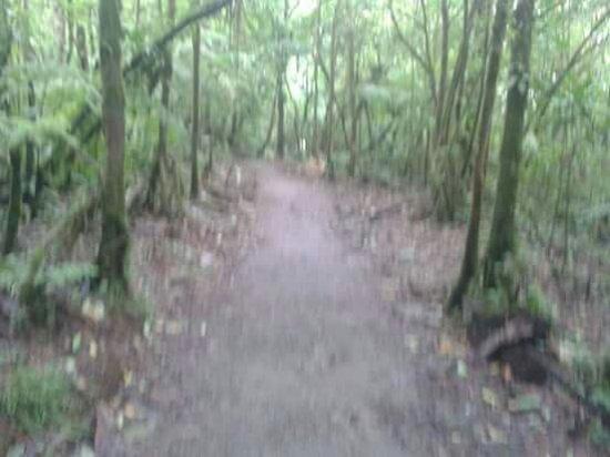 Tenorio Volcano National Park, Costa Rica: FB_IMG_1449488806616_large.jpg