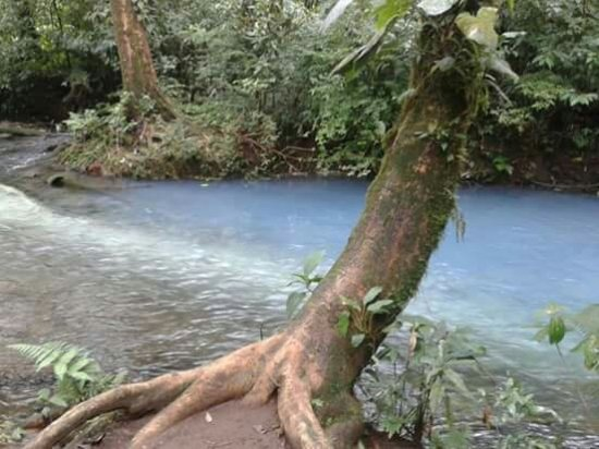 Tenorio Volcano National Park, Costa Rica: FB_IMG_1449488689138_large.jpg