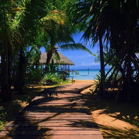 Снимок Остров Бастиментос