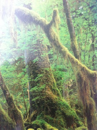 Fort Townsend State Park : Mossy forest detail