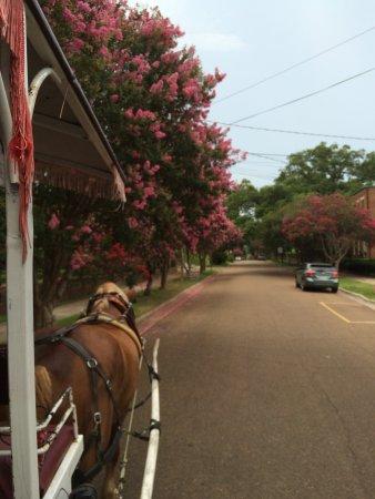 Natchez, MS: Historic streets in bloom