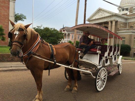 Natchez, MS: Our Horse