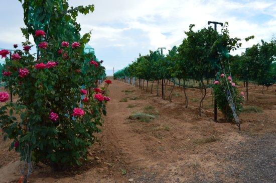 Kingman, AZ: Más viñedos