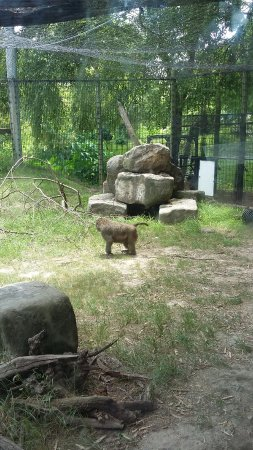 Lemur House Picture Of Louisiana Purchase Gardens Zoo Monroe Tripadvisor