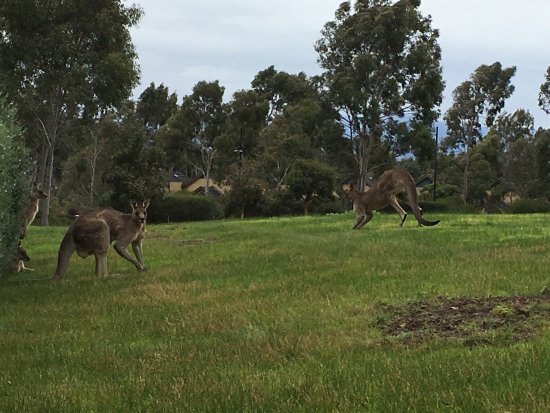 Chirnside Park, Australia: photo1.jpg