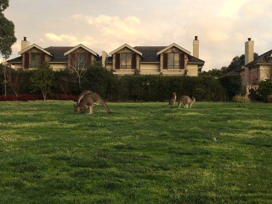 Chirnside Park, Australia: photo2.jpg
