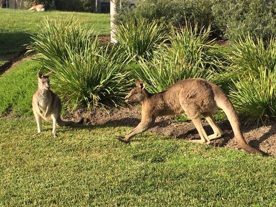 Chirnside Park, Australia: photo3.jpg