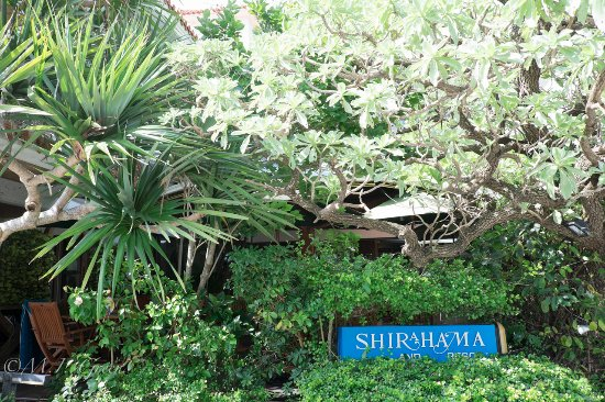 Shirahama Island Resort: 玄関脇にあるテラス(木の後ろ側)