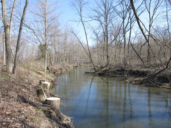 Kenosha, WI: The creek