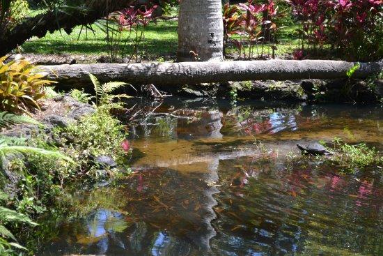 Florida Tech Botanical Garden: Turtle sunning