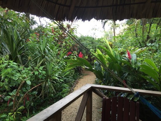 Ian Anderson's Caves Branch Jungle Lodge : photo3.jpg