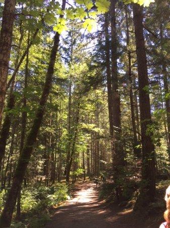 Nanaimo, Kanada: Forest of trees at Englishman River Falls Provincial Park