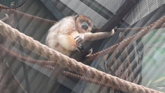 Parc Zoologique Henri de Lunaret: 20160714_172822_large.jpg