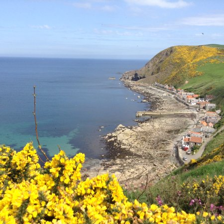Crovie from viewing area