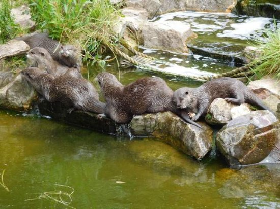 Ottery St. Mary, UK: Otters...
