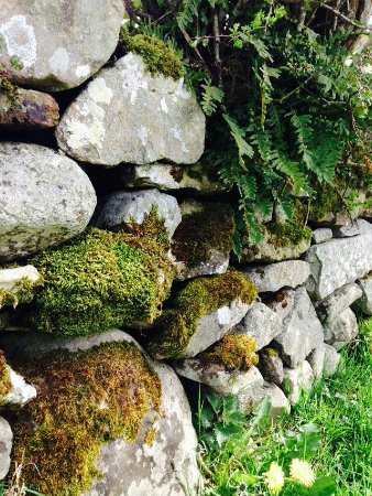 Oldcastle, Irlanda: Some ferns and mosses growing on the stones along the route.