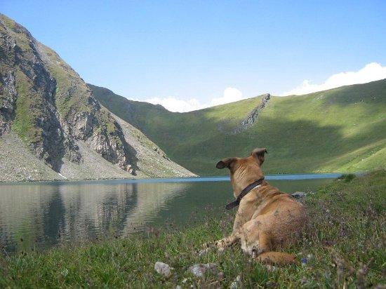 Morgex, Italien: Lago vista cane