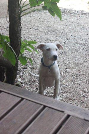 Beach Cocomo: Little puppy!