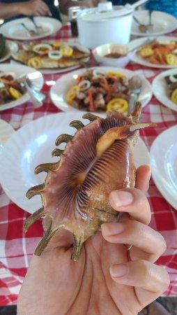 Lapu Lapu, Filipiny: Spider shells