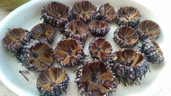 Lapu Lapu, Filippijnen: Fresh sea urchins from the sea