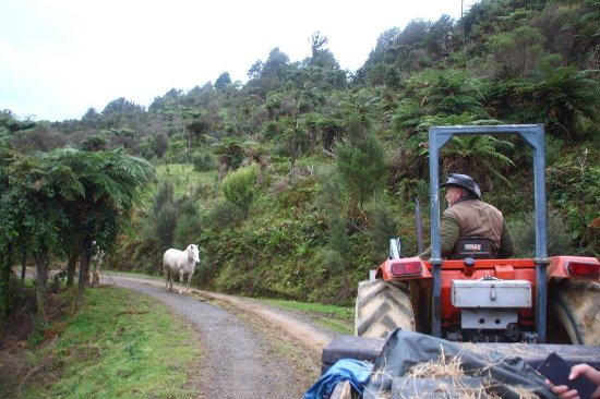 Themsen, New Zealand: Farm tour --- met Tiberius