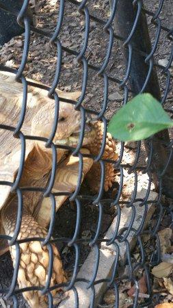 Locust Grove, GA: 20160714_130713_001_large.jpg