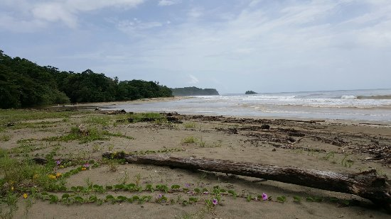 Cocles, Costa Rica: 20160714_104501_large.jpg