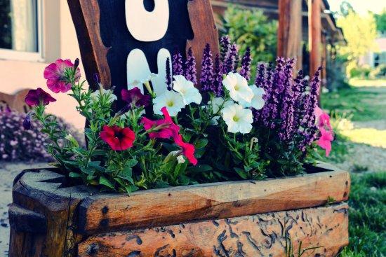 La Adela, Argentina: Flores para respirar aire puro