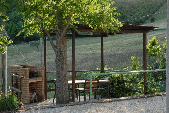 Arcevia, Italia: boschetto