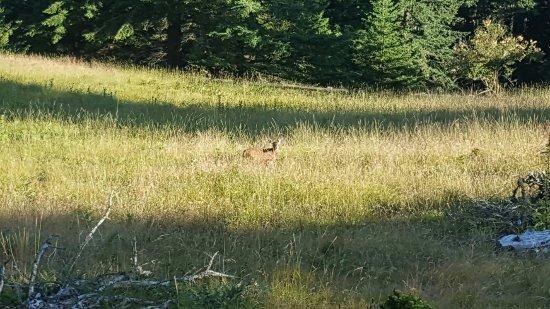 Moran State Park: 20160713_201810_large.jpg