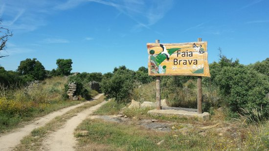 Reserva da Faia Brava: From Algodres walking to the reserve