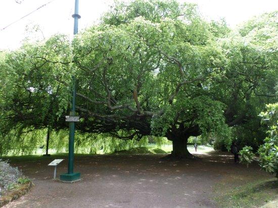 Jardin Public de Bayeux: Under the canopy