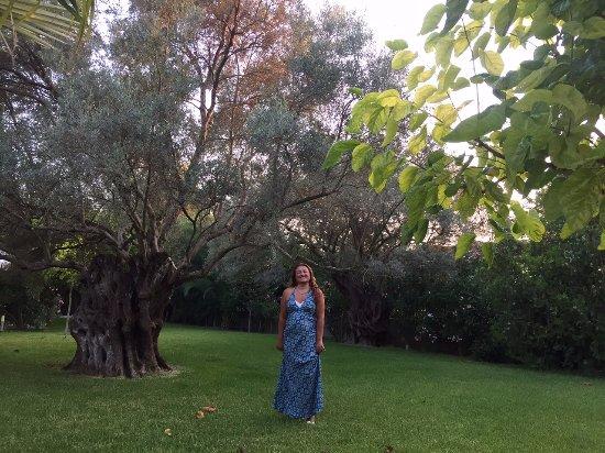 Anthias Garden Maisonettes: Beautiful garden with olive trees